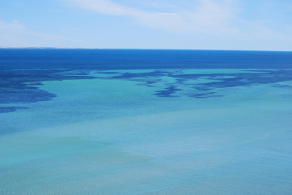 Shark-Bay (11)