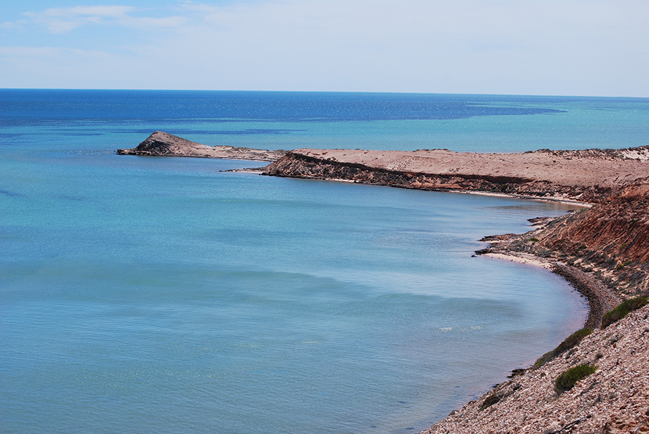 Shark-Bay (12)