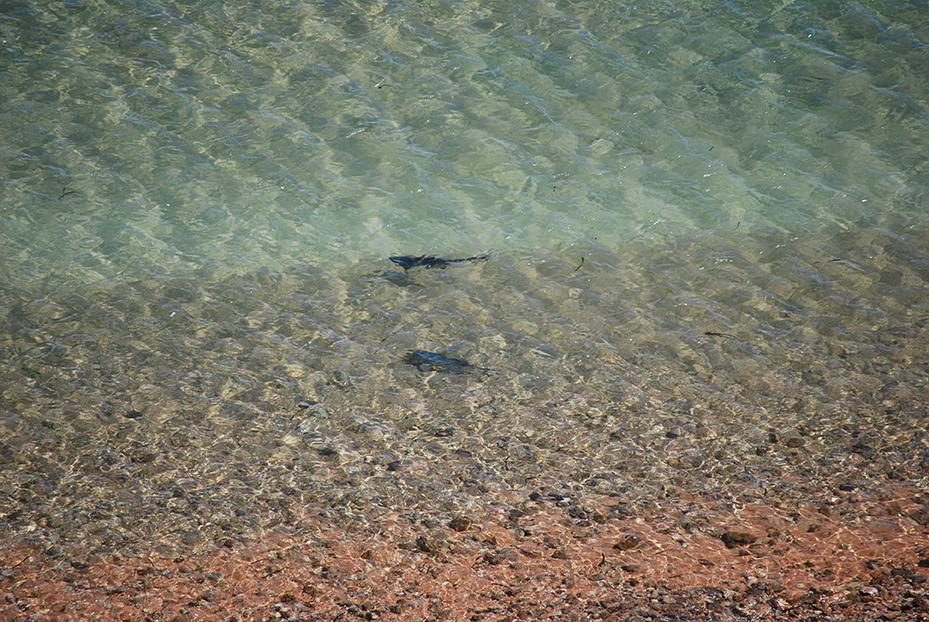 Shark-Bay (13)