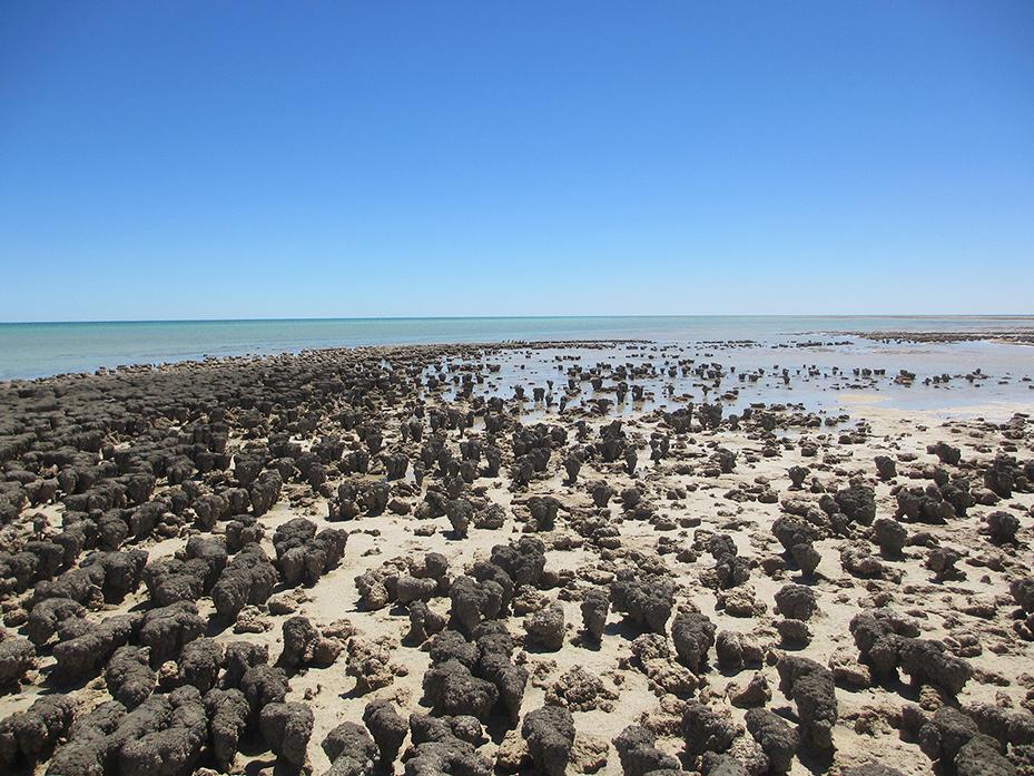 Shark-Bay (3)