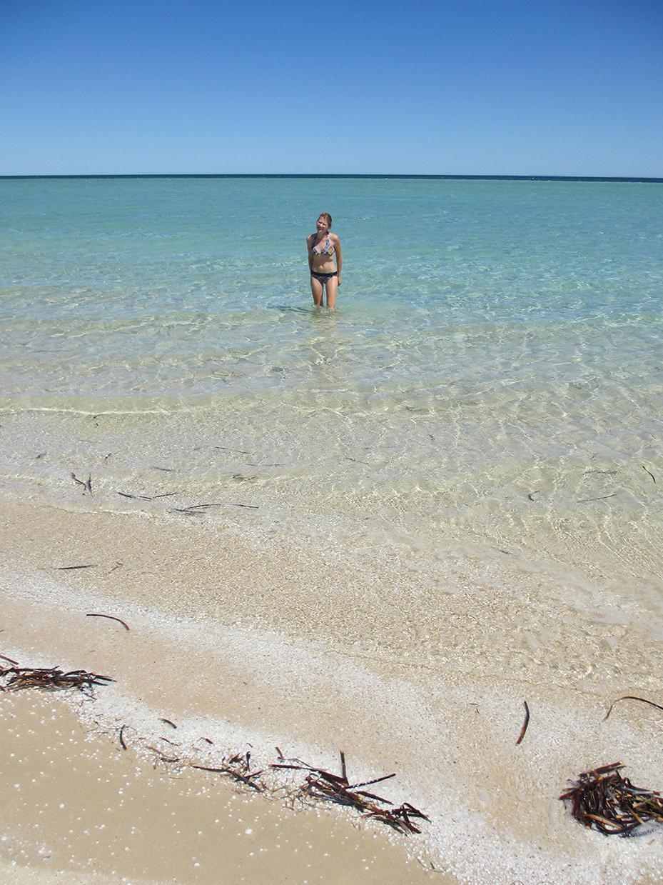 Shark-Bay (4)