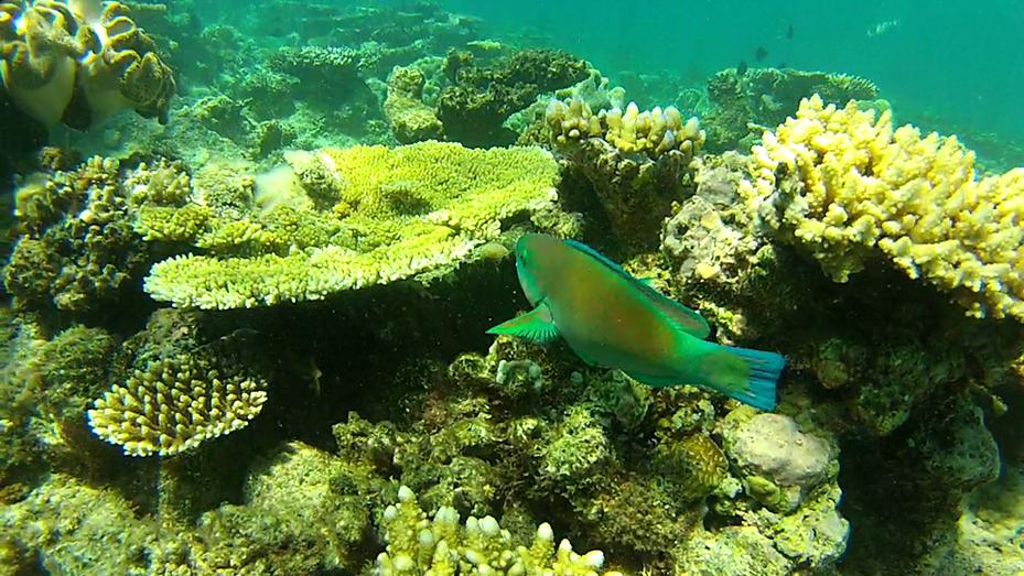 Cairns (6)