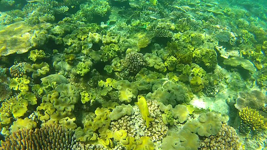 Cairns (8)